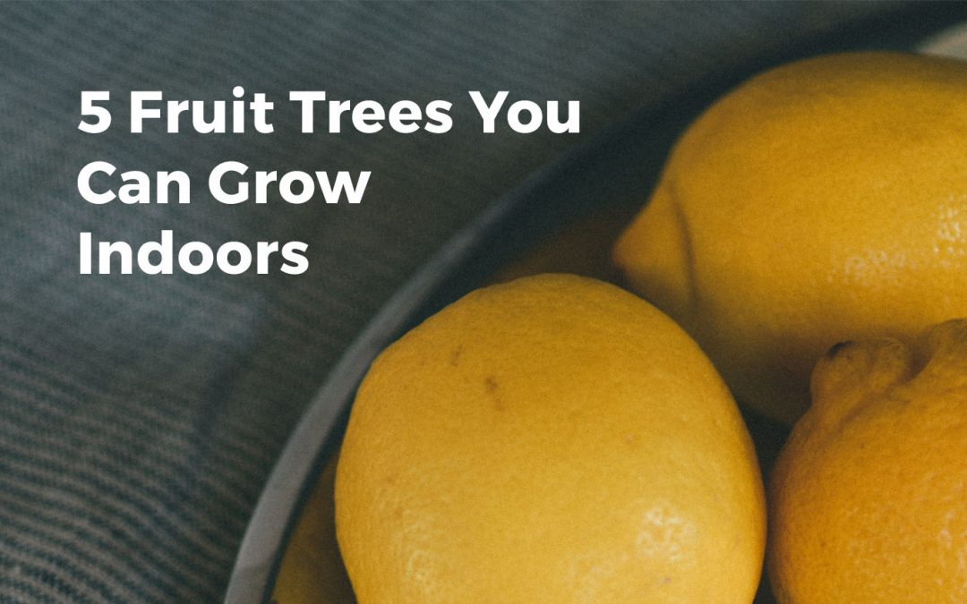 Grow Fruit Trees Inside? Top 5 Incredible Edibles!
