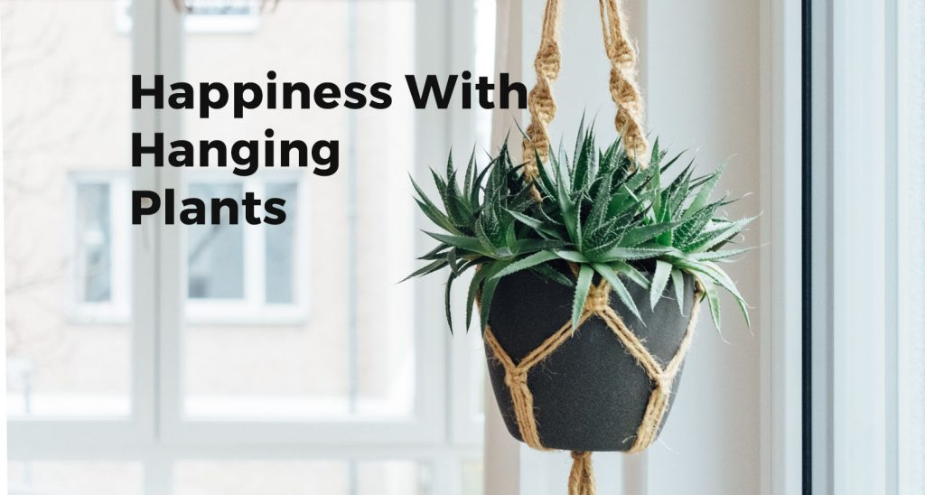 Indoor Plants Happiness