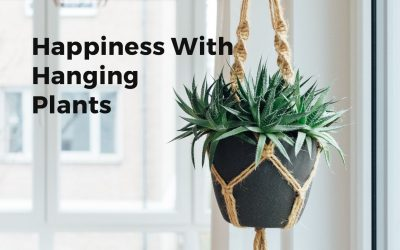 Happiness In A Small Space With Indoor Plants